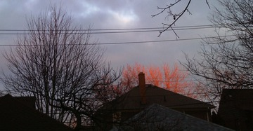 Maurice Greenia, Jr. Collections: Sunset on Treetops. Grosse Pointe Park, 2012
